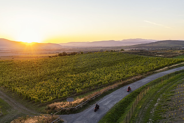 Sunset in the vineyards