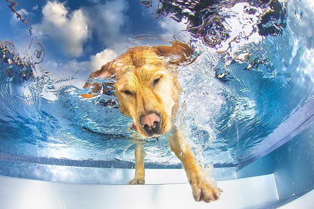 dogs underwater - Photoshootinghunde unterwasser - Hunde Unterwasser