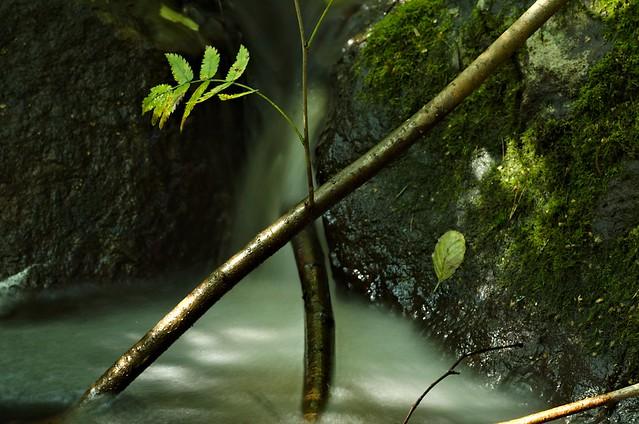 Nature bits