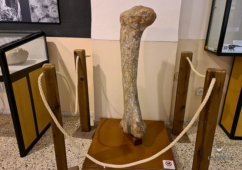 Tierra de Dinosaurios en Burgos (15)