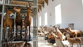 In autunno dopo 8 anni riaprirà il Museo di Scienze naturali di Torino