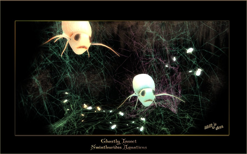 Coming soon Sminthurides aquaticus – Ghostly Insects with atmospheric mesh cobwebs