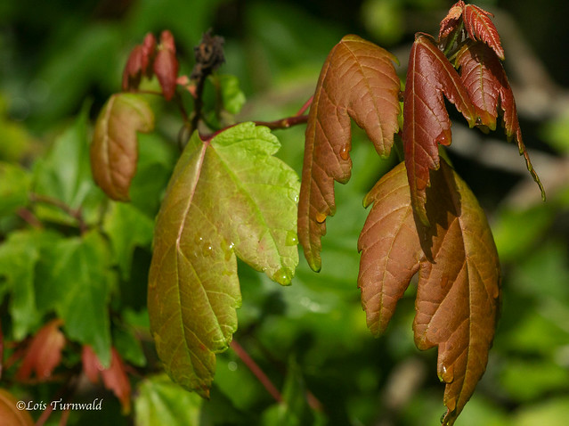 Changing Colors -