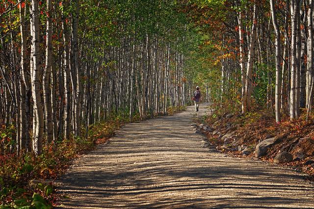Parmi les bouleaux/Among the birch trees