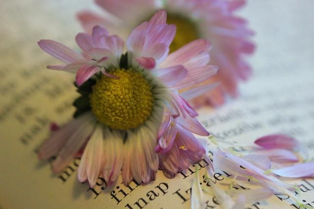 Book and flowers.. / Könyv és virágok..