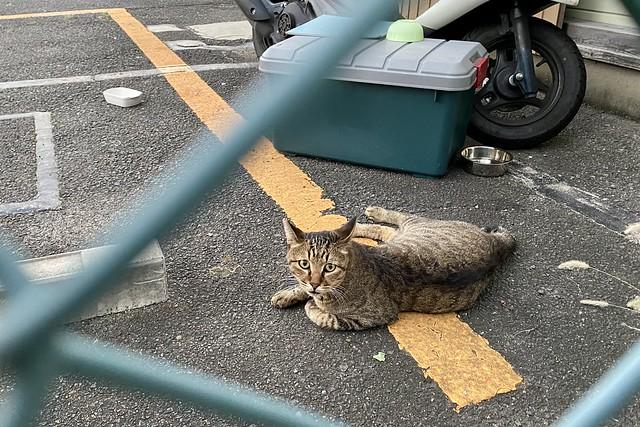 Today's Cat@2021−09−20