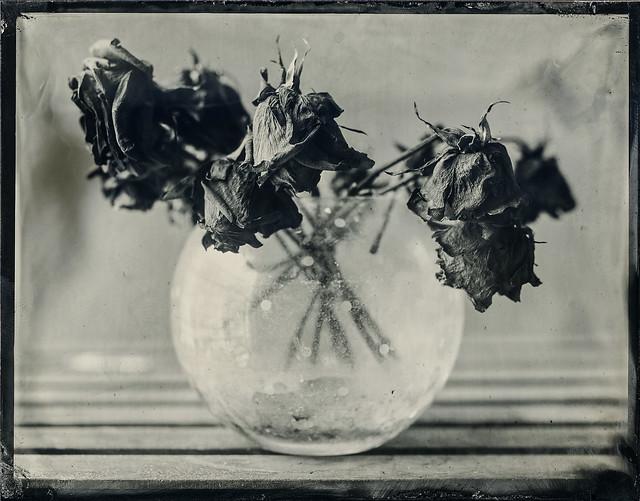 Wilted - 4x5 Tintype