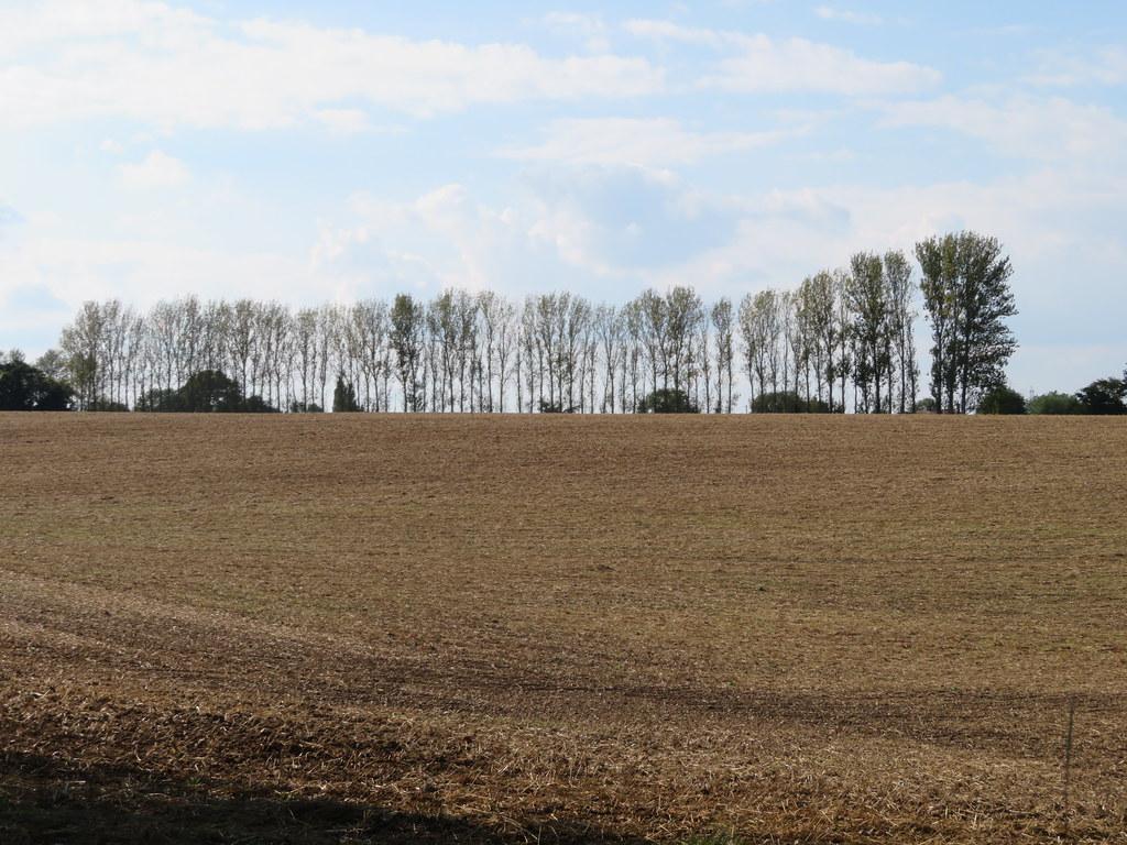 UK - Essex - Near Mount Bures - Field