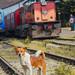 Friendly dog at Badulla Railway station