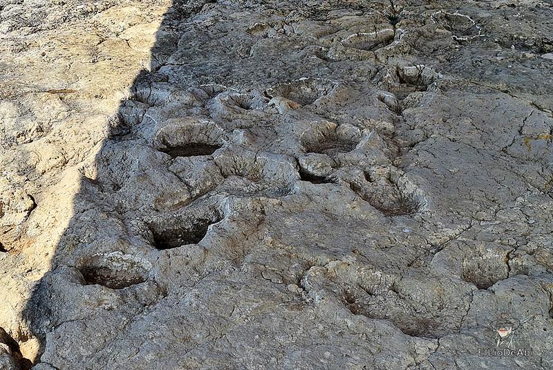 Tierra de Dinosaurios en Burgos (36)