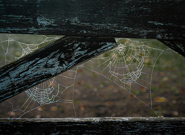 Peeling Paint and Spiders Webs
