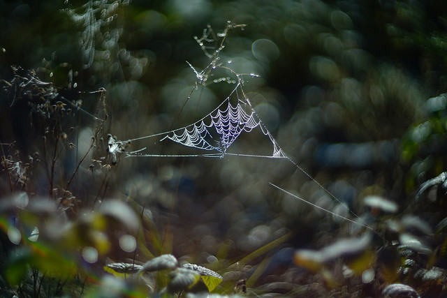 the spider web .