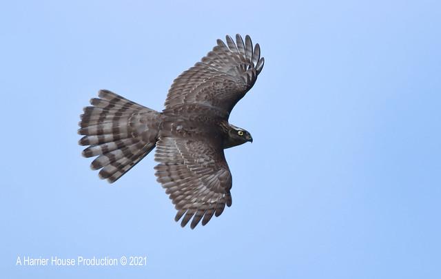 PB21-90-1055 Hawks 21