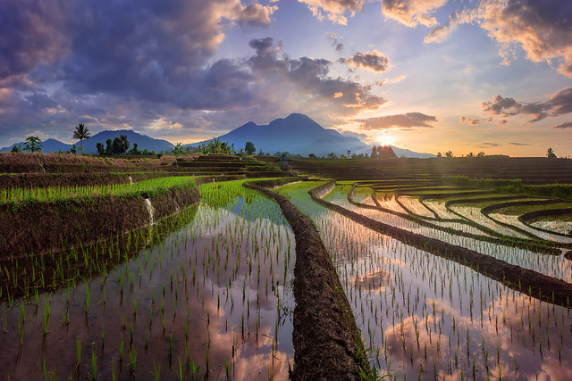 The story of a reflection in the morning in a rural rice field