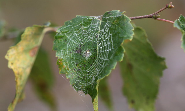 foggy web , explored!