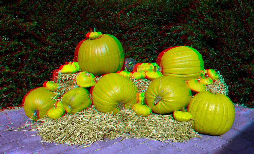 Pompoenen Blijdorp Zoo 3D