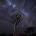 Magic stars over the Quivertree A733765