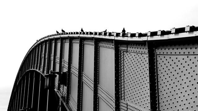 Birds on the Bridge