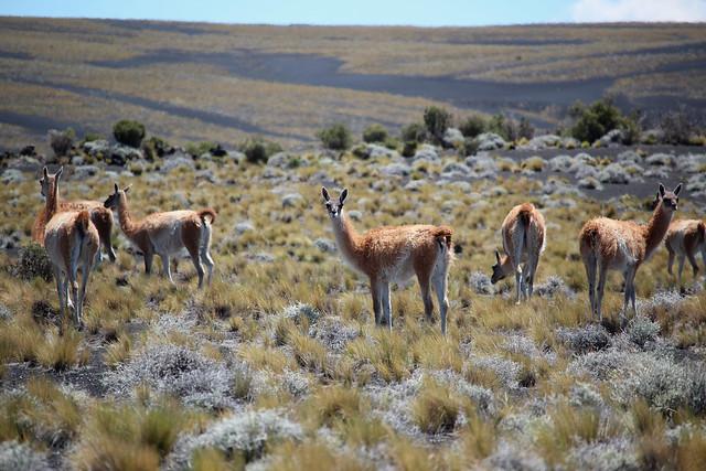 Reserva La Payunia - Mendoza