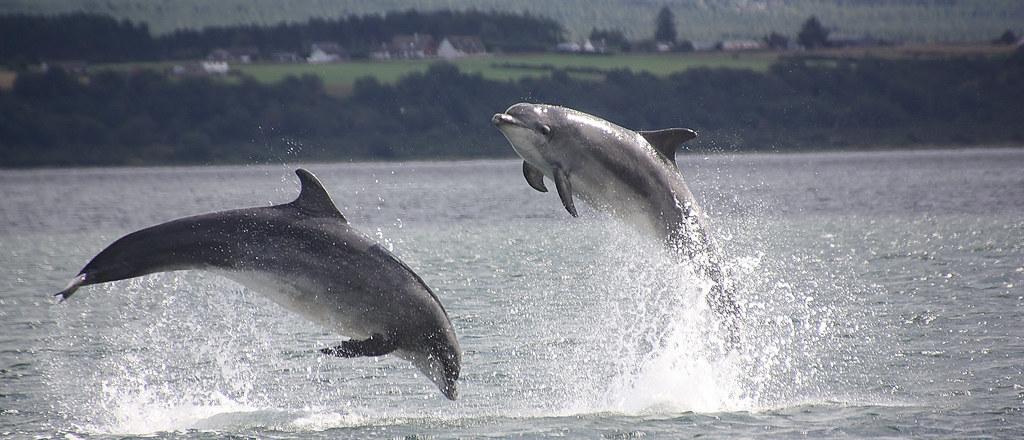 Dolphins, Jump for Joy.