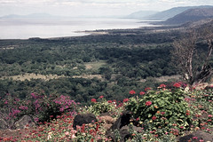 TZ Lake Manyara view from hotel - 1965 (W65-A76-19)