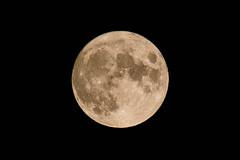 Lúa de setembro