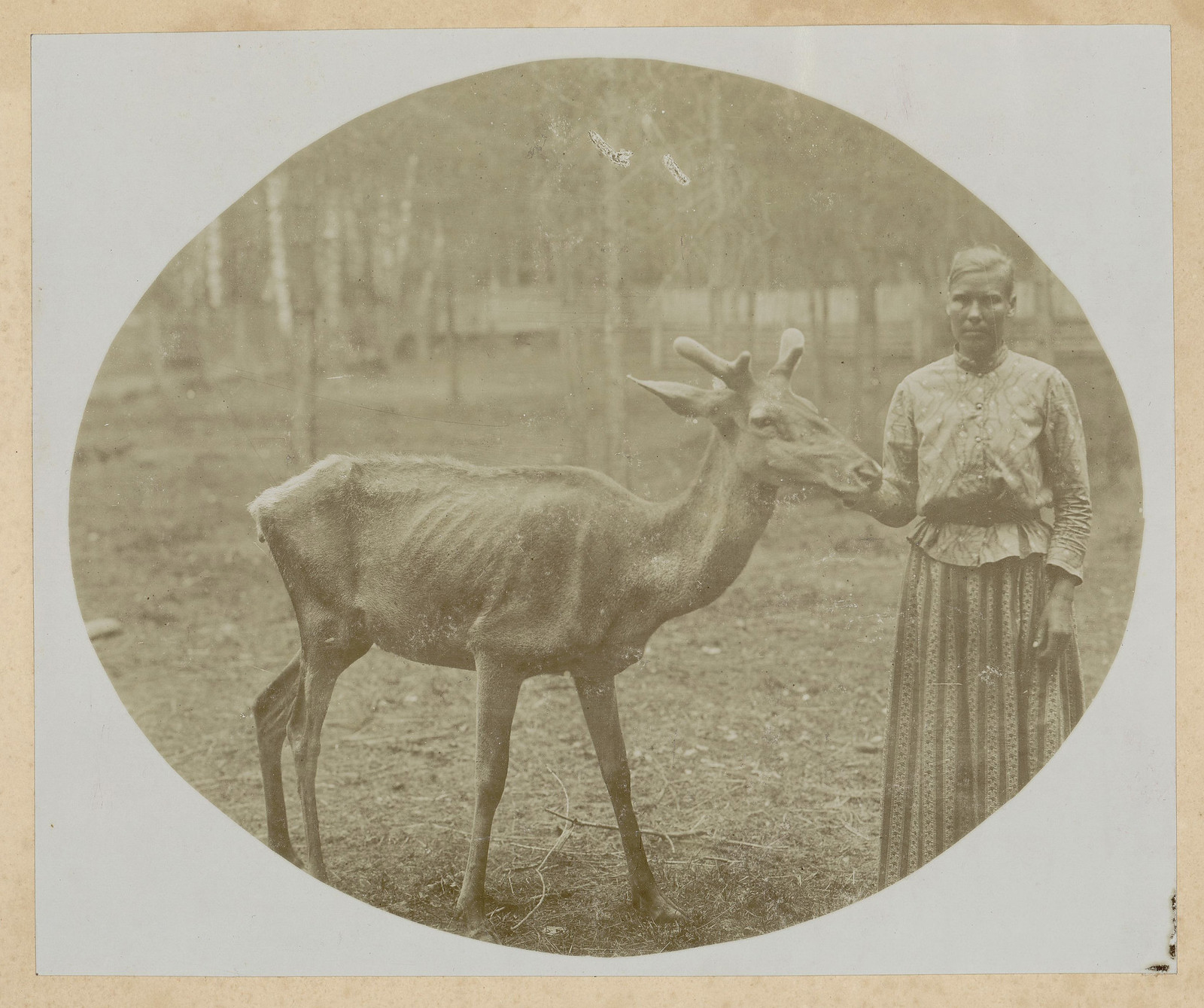 В роще Архангельского на территории ламника - крестьянка с ламой.