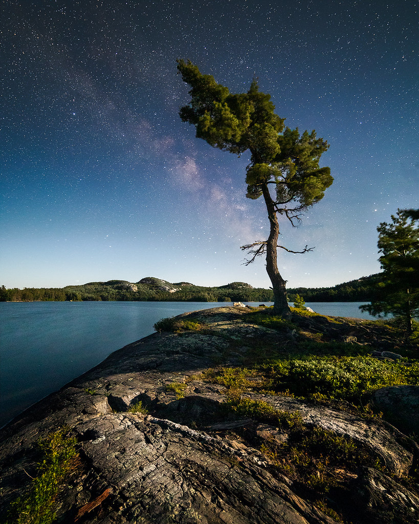 Under a Moonlit Sky