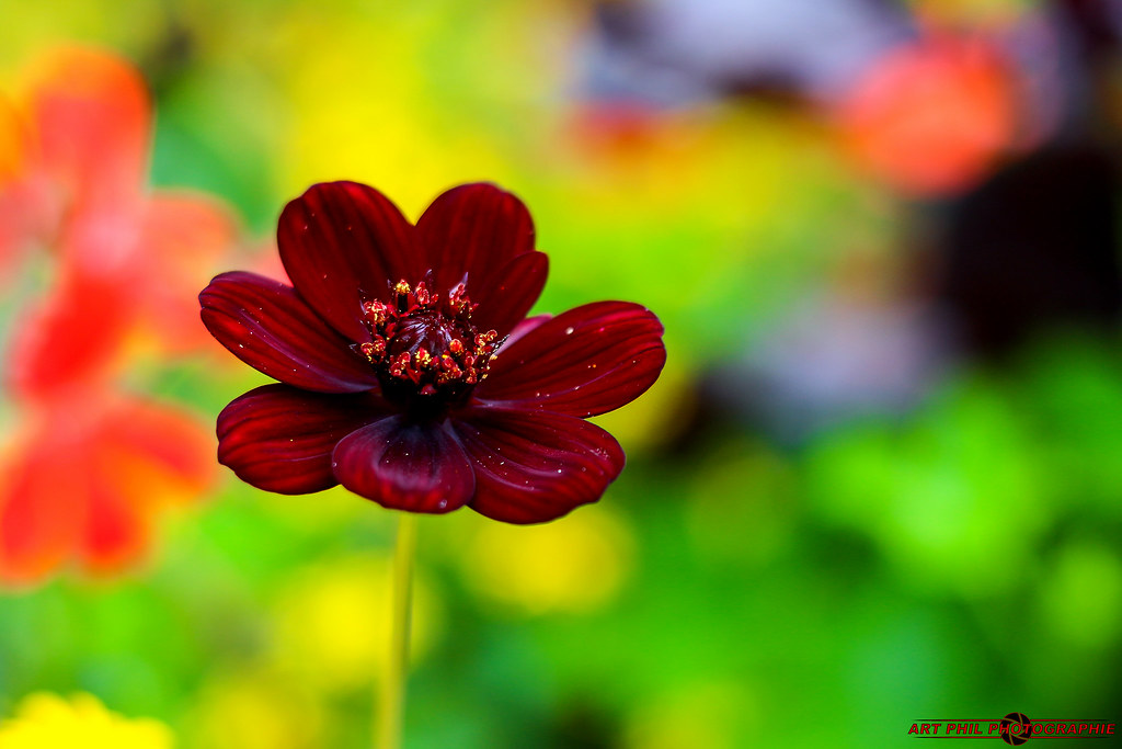 Fleurs Pétales de Couleurs et Bokeh Multicolors