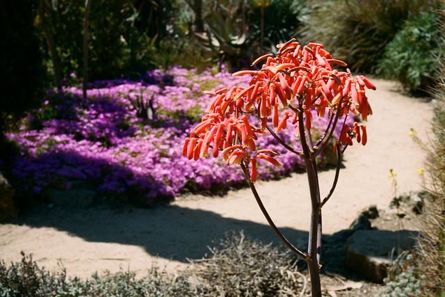 Arizona Garden, Stanford