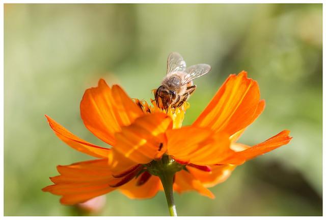 abeille 04 09 21 03