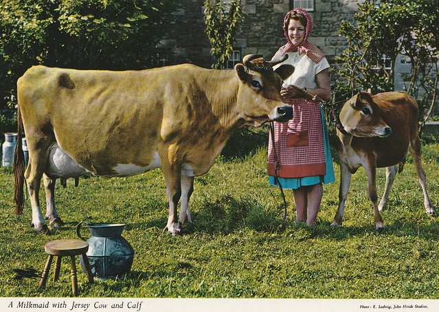 Channel Islands - Jersey (Milkmaid with Jersey Cow and Calf)