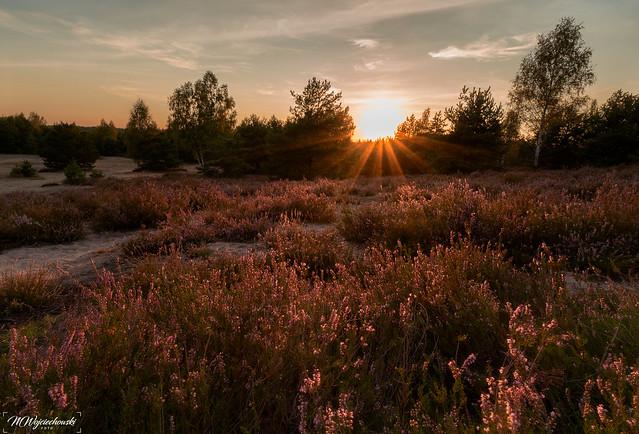 sunset at the heatherfield
