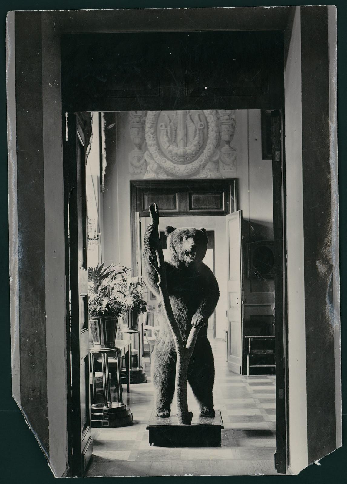 Чучело медведя при входе в Императорский зал во дворце в Архангельском
