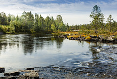 Autumn by the river in Nordland