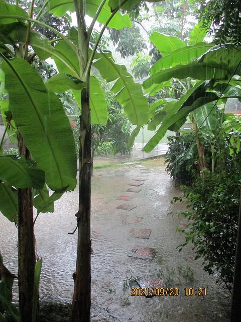 rain in our yard