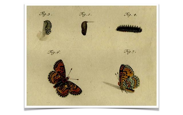 mariposa-muñecas-rusas