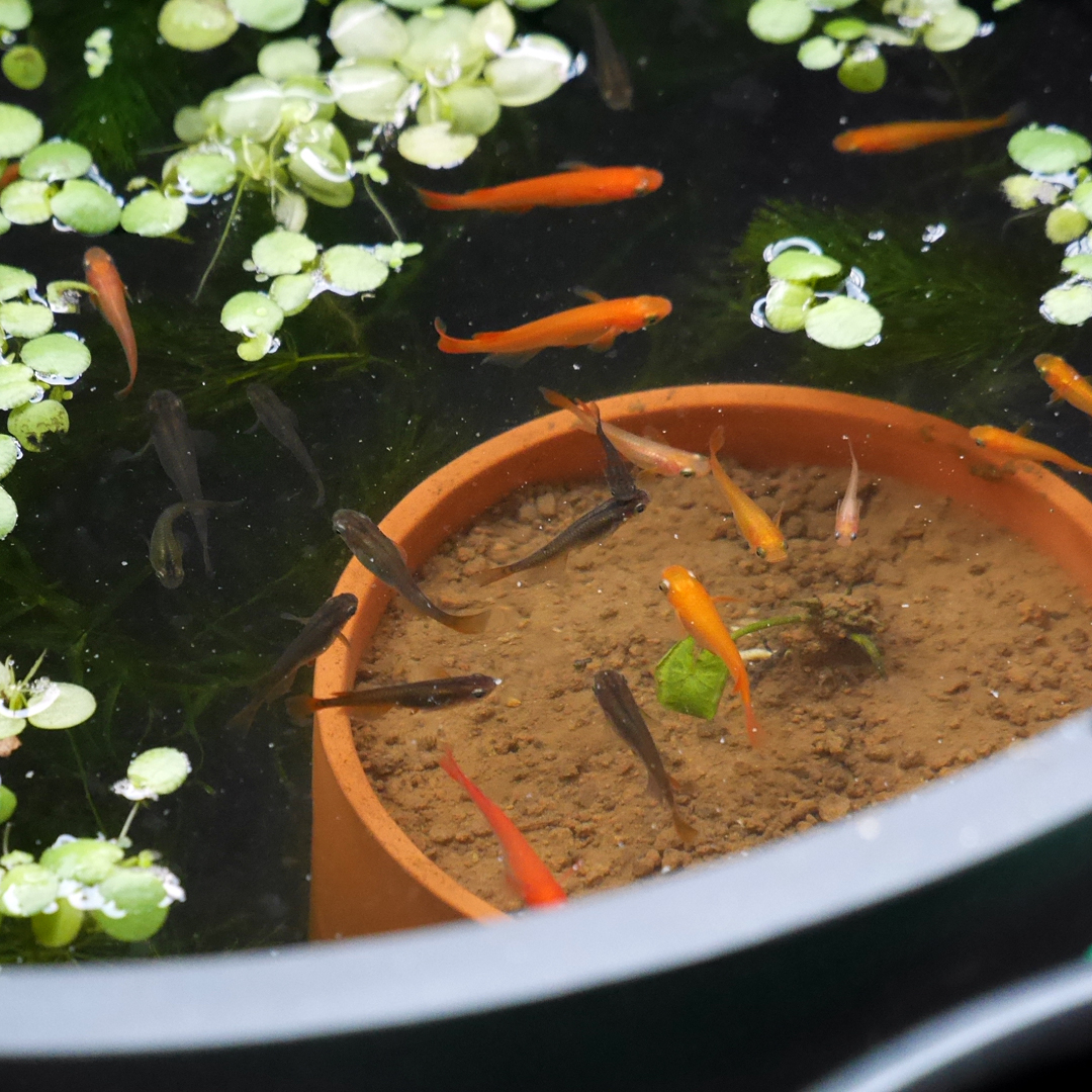 1080 Container Water Garden 20160219