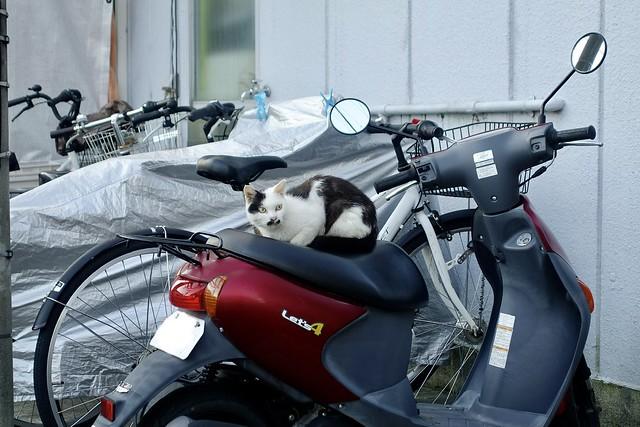 Today's Cat@2021−09−21