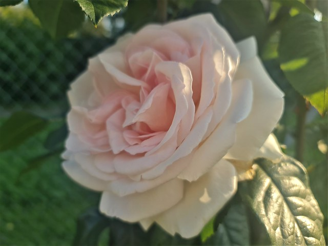 Frühherbst im Hausgarten - Faszination Rosen