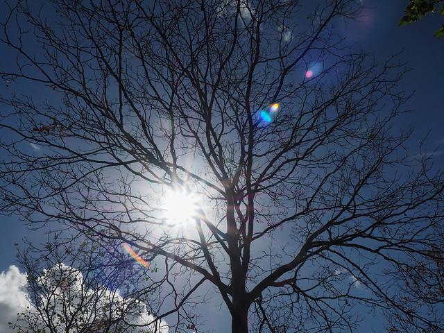 Sommer-Sonnenstrahlen