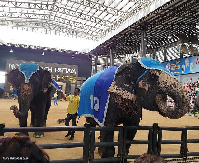 nongnooch garden pattaya elephant