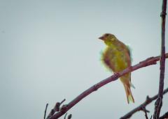 _DSC7126 Mystery Bird II