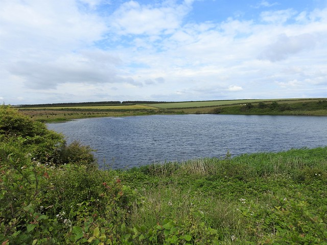 Hauxley Nature Reserve, Northumberland