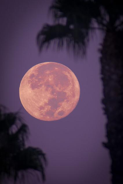 Mid-Autumn Moon, 2021