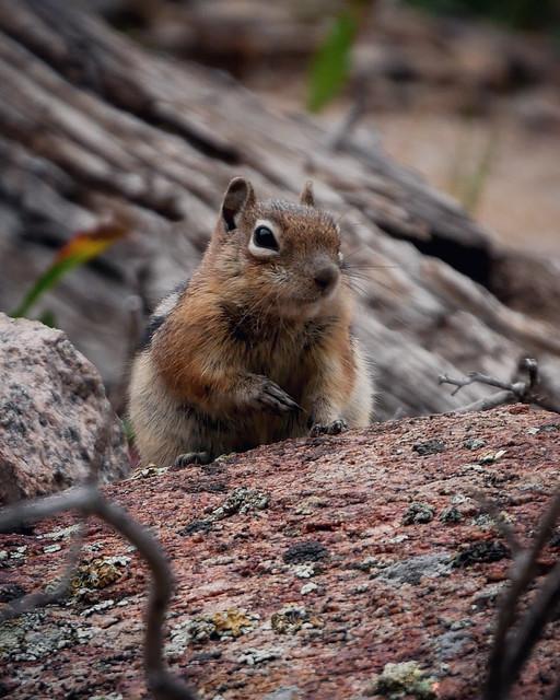 Chipmunk friend