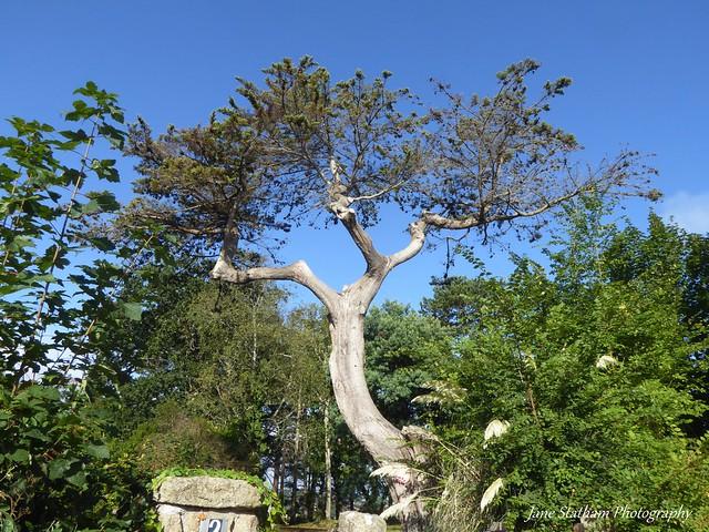 Happy Tree-mendous Tuesday.