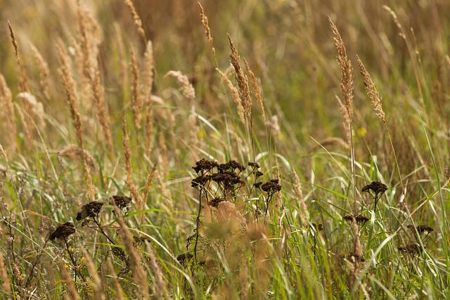 Gräser im Herbst 21.9.2021