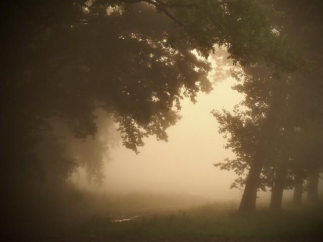 Foggy…