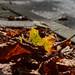 2021 09 18 - urban leaf-fall